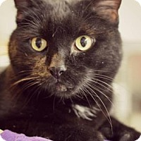 Adopt A Pet :: Cleo - Niagara Falls, NY