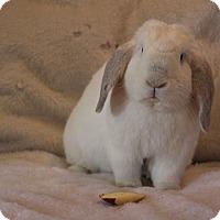 Adopt A Pet :: Oscar - Hillside, NJ