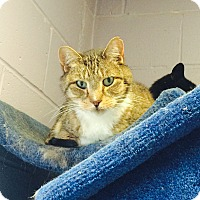 Adopt A Pet :: Hamilton - Oakland, NJ