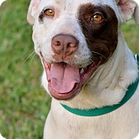 Adopt A Pet :: Diana - Washington, GA