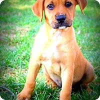 Adopt A Pet :: Summer Sunshine - Glastonbury, CT