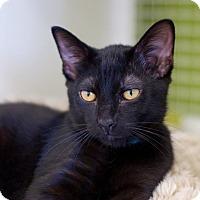 Adopt A Pet :: Magic - Troy, MI