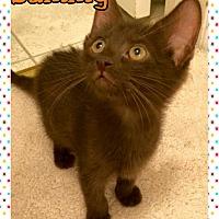 Adopt A Pet :: Sammy - Atco, NJ