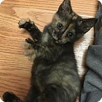 Adopt A Pet :: Dot - Cheltenham, PA