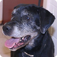 Adopt A Pet :: Hazel - McDonough, GA
