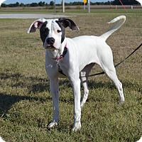 Adopt A Pet :: Doris - Larned, KS
