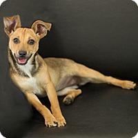 Adopt A Pet :: Juni - Dalton, GA
