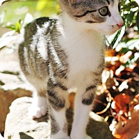 Adopt A Pet :: Fili - Huntsville, AL