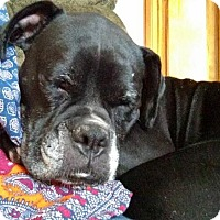 Adopt A Pet :: Baby Girl - Woodbury, MN