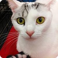 Adopt A Pet :: Kokomo - Fredericksburg, VA