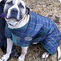 Adopt A Pet :: Dudley - Duncan, BC