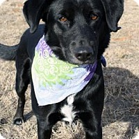Adopt A Pet :: Jyn - Norman, OK