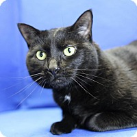 Adopt A Pet :: Muffin - Winston-Salem, NC