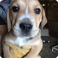 Adopt A Pet :: Karo - Hohenwald, TN