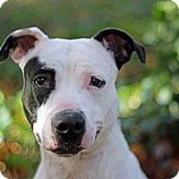 Adopt A Pet :: Patches - Port Washington, NY