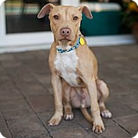 Adopt A Pet :: Riley - Miami, FL