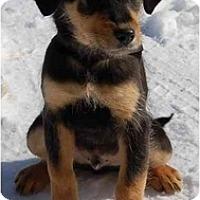 Adopt A Pet :: Rusty (AE) - Staunton, VA
