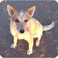 Adopt A Pet :: Ella ADOPTION PENDING - Phoenix, AZ