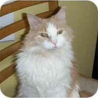 Adopt A Pet :: Alex - Hamburg, NY