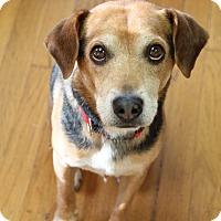Adopt A Pet :: Jackson Bean - Marietta, GA