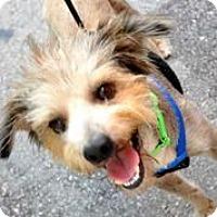 Adopt A Pet :: Ozzie - Austin, TX