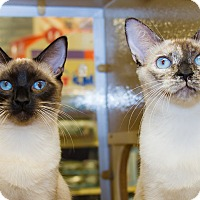 Adopt A Pet :: Sandy & Candice - Irvine, CA