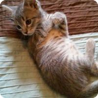 Adopt A Pet :: Monroe - Fairborn, OH