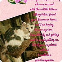 Adopt A Pet :: Belle - Brandon, FL