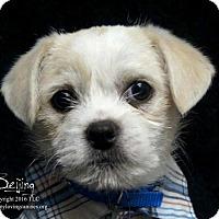 Adopt A Pet :: Beijing - Simi Valley, CA