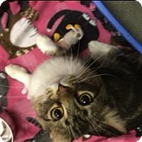 Adopt A Pet :: Bella - Medina, OH