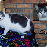 Adopt A Pet :: Spice - Daleville, AL