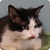 Adopt A Pet :: Meesha - Monroe, MI