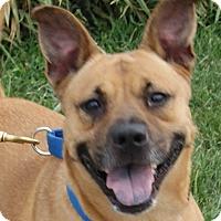 Adopt A Pet :: Rachael - Monroe, MI