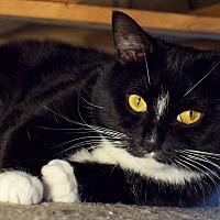 Adopt A Pet :: Kiki - Columbus, OH
