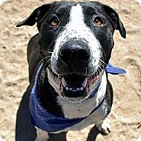 Adopt A Pet :: Cassius - Tucson, AZ
