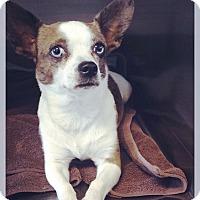 Adopt A Pet :: Jazzie - Los Alamitos, CA