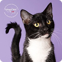 Adopt A Pet :: JD - Apache Junction, AZ