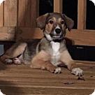 Adopt A Pet :: Ava