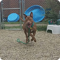 Adopt A Pet :: Will - Cleveland, OH