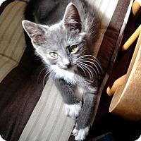Adopt A Pet :: Smokey - Southington, CT