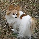 Adopt A Pet :: Bailey (age 14) in VA