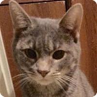 Adopt A Pet :: Julie - Franklin, WV