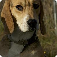 Adopt A Pet :: Trooper - Potsdam, NY