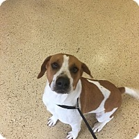Adopt A Pet :: remi - Marion, IN