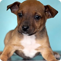 Adopt A Pet :: Johnson - Waldorf, MD