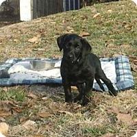 Adopt A Pet :: Turner - Fenton, MO