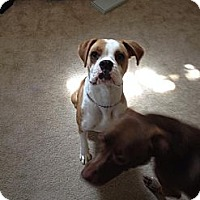 Adopt A Pet :: Roxy - Vista, CA