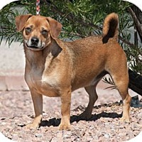Adopt A Pet :: Blitz (paired with Bruno) - Santa Fe, NM