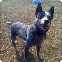 Adopt A Pet :: Fille - Siler City, NC