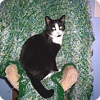 Adopt A Pet :: Truly - Grand Chain, IL